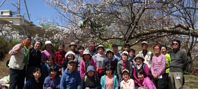 春の公開ハイク:美ノ山(581.5m)お花見ハイキング